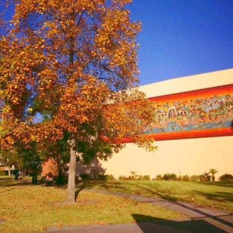 Ksenia, L.A.: Das Schönste auf dem Weg zur Vorlesung ist unser Sporthalle mit dem wunderschönen Mosaik-Gemälde und die ersten Anzeichen des Jahreszeitenwechsels!
