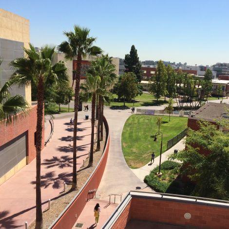 Blick auf grünen Campus mit Palmen