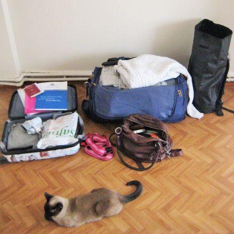 Vier gepackte Taschen und eine Katze