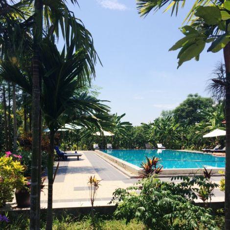 Pool umgeben von Palmen