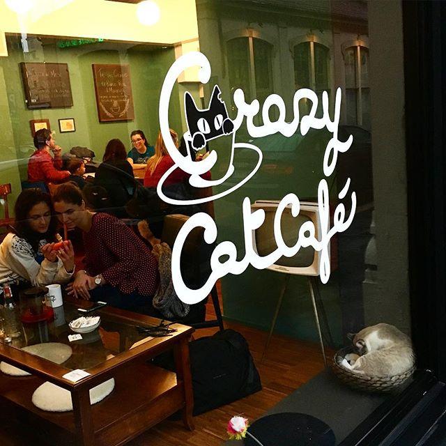 Katzencafé Mailand