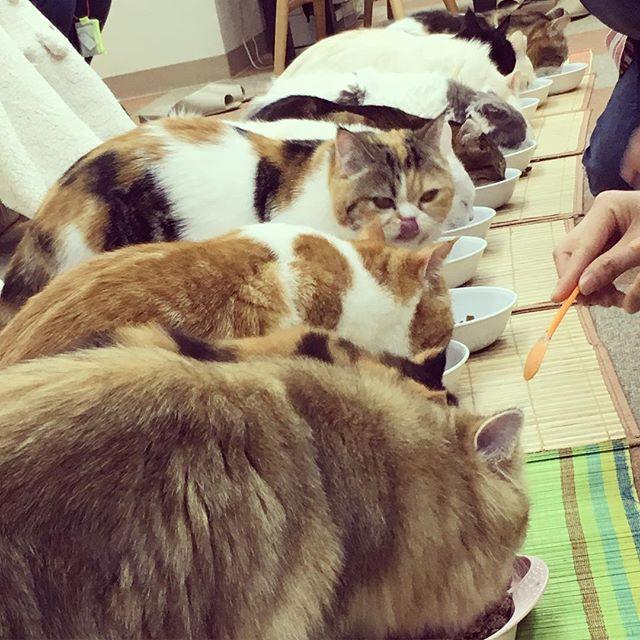 Katzencafé in Tokio