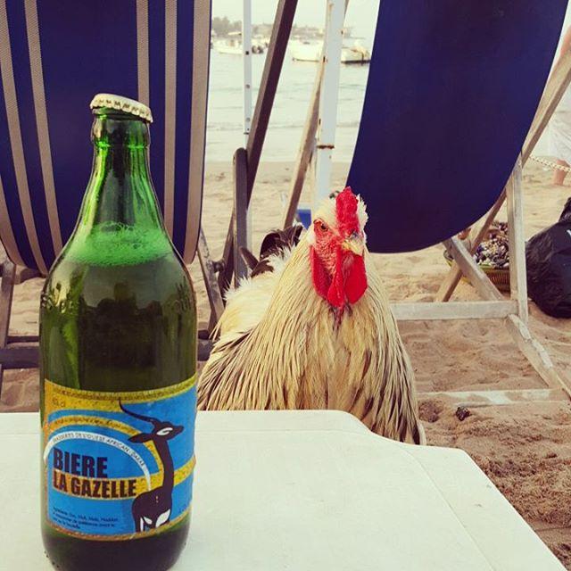 Das senegalesische Bier-Huhn
