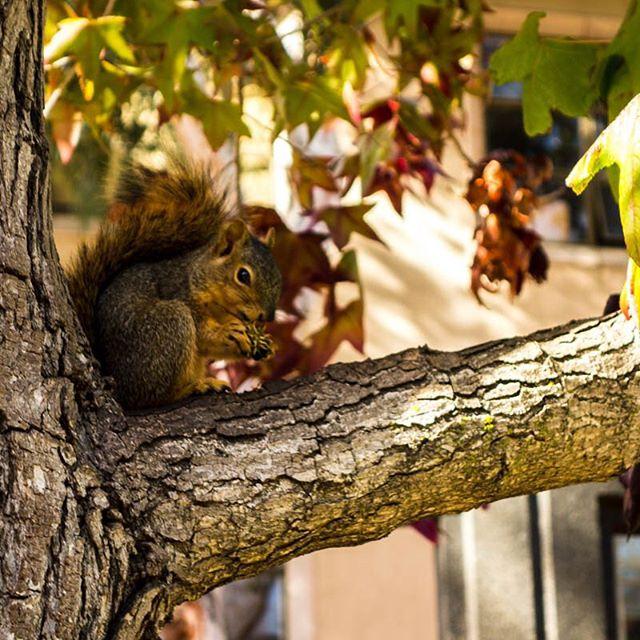 Oles Eichhörnchen