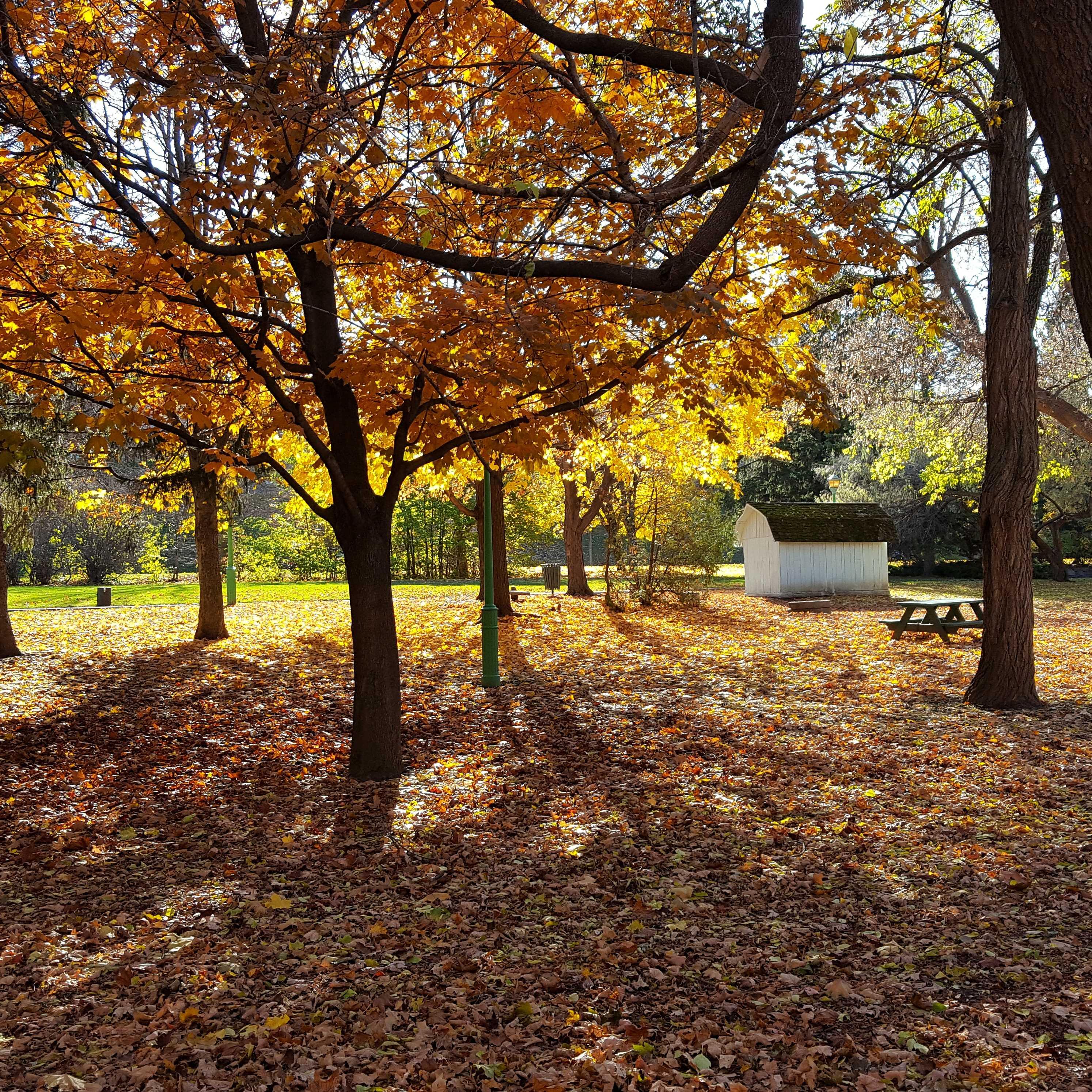 Bäume mit gelbem Laub