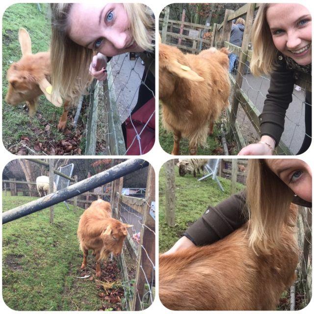 Selfies mit einer Ziege.