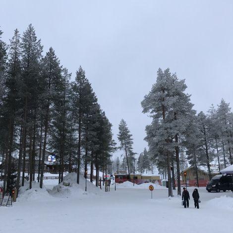 Schnee und Tannenbäume