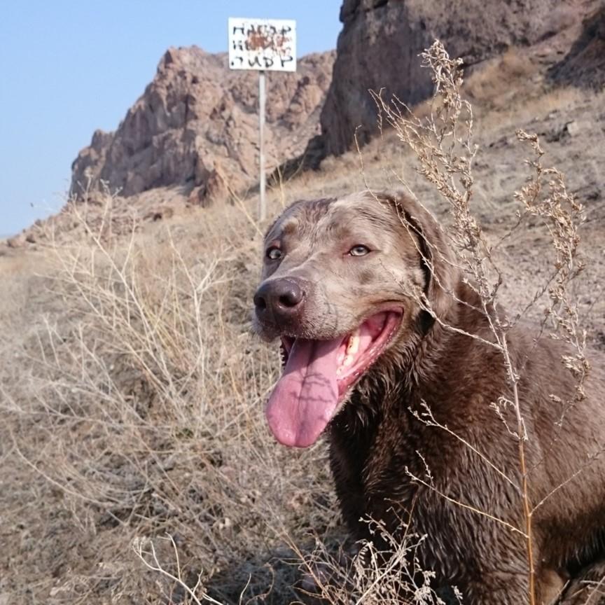 Brauner Labrador im Vordergrund, Schild mit Einschusslöchern im Hintergrund