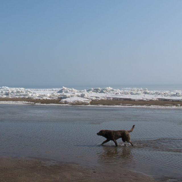 Hund am Strand der Kapchagai-Talsperre.