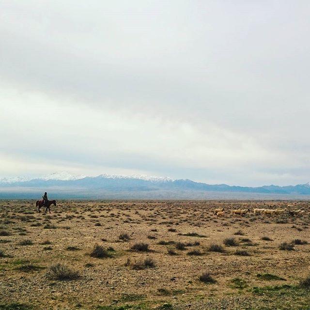 Gefahren in der kasachischen Steppe