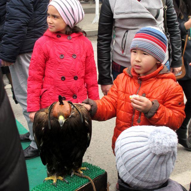 Ein Junge streichelt einen Greifvogel