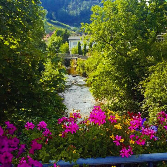 Schöne Aussicht mit bunten Blumen und einem Fluss in Hornberg im Schwarzwald