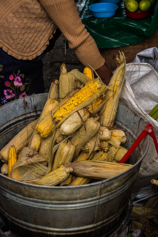 Gekochte Maiskolben