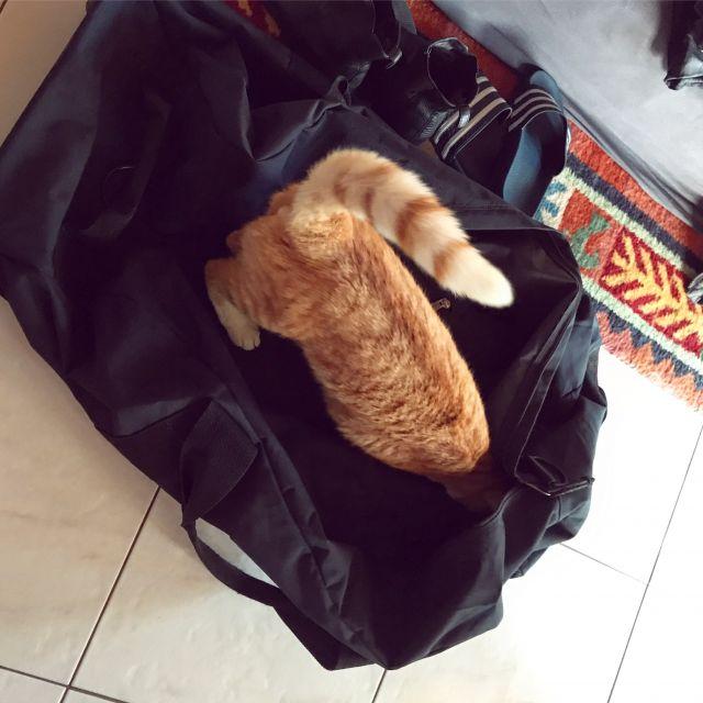 Ein kleiner dicker Kater, der sich in meiner Reisetasche versteckt.