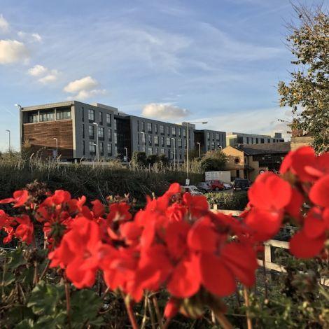 Rote Blumen im Vordergrund, Gebäude im Hintergrund