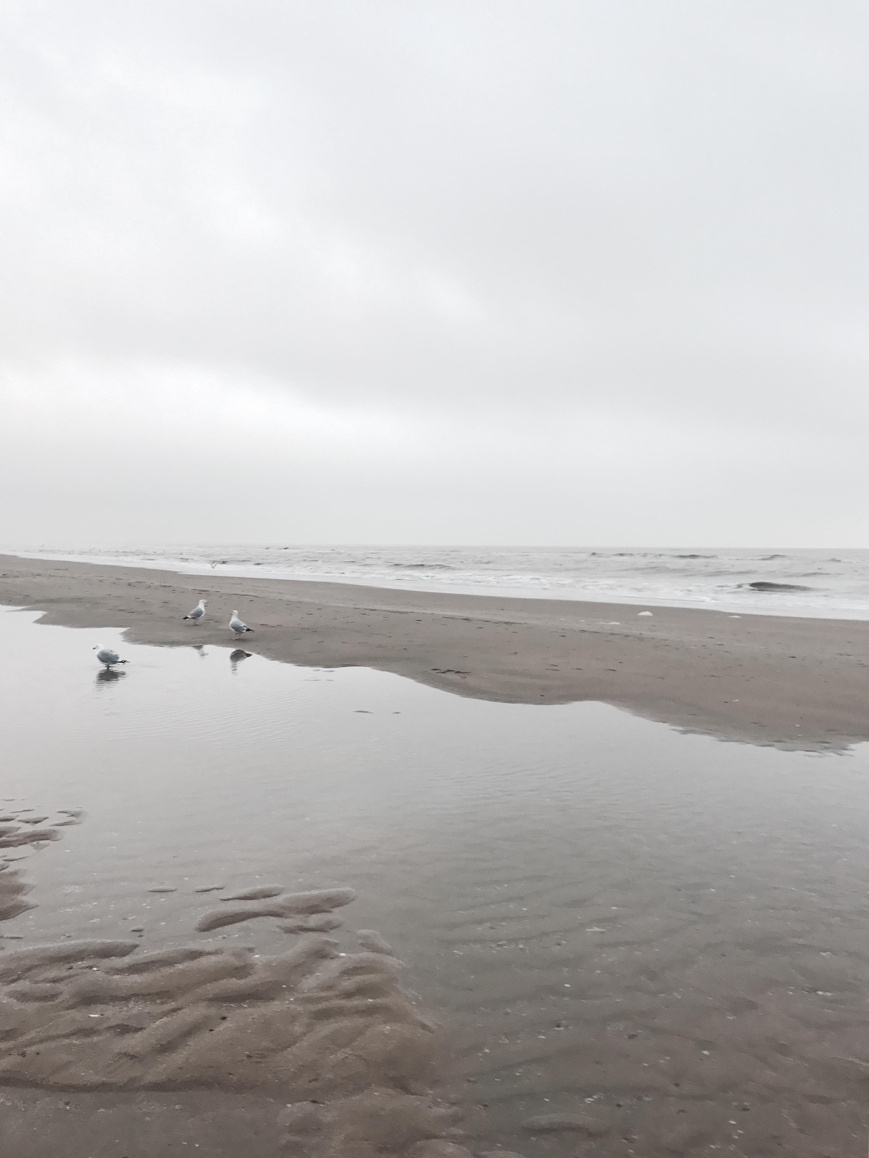 Der Strand von Zandvoort