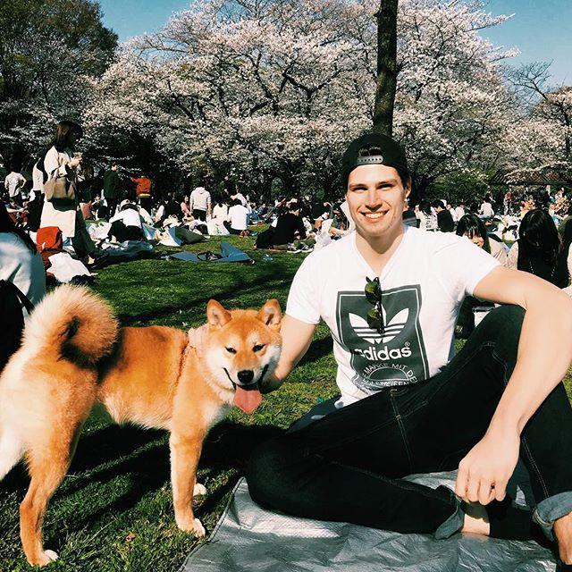 Es ist #Sakura - die Zeit der Kirschblüte - und das wird in Japan besonders…