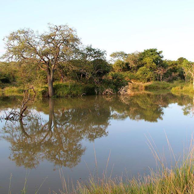 Krokodil-Teich spottet auf unserem Bushwalk durch das…