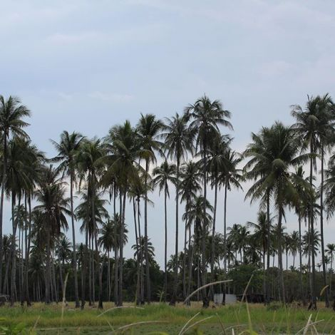 #erlebees #indonesien #pulaubintan #bintan #bintanisland #palmtrees…