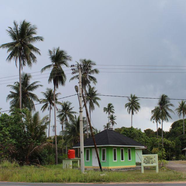 Das Bild zeigt eine palmengesäumte Straße und ein grünes Haus.