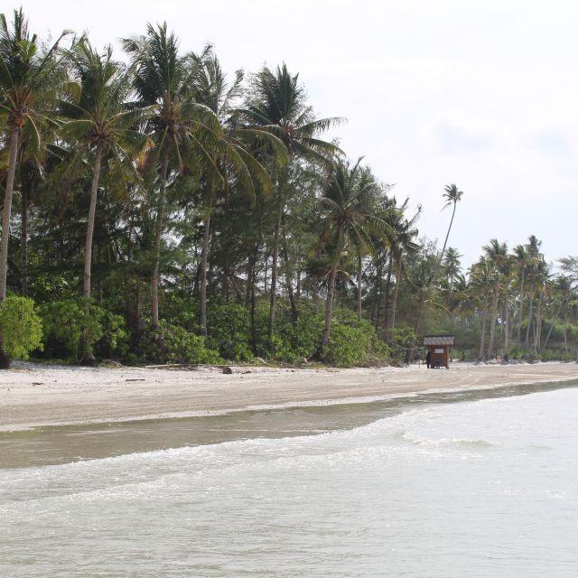 Das Bild zeigt einen palmengesäumten Standabschnitt.