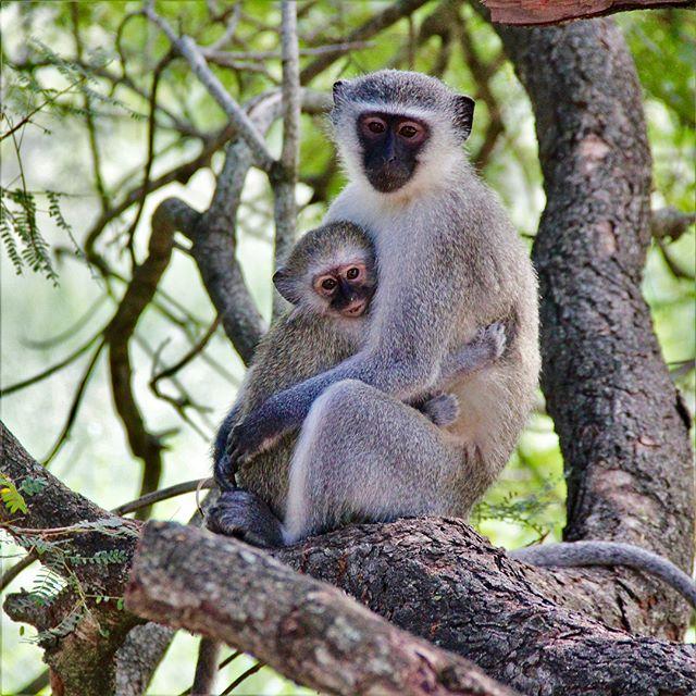 Meine #favourite Eindrücke aus dem Krüger Nationalpark 🙈🦒…