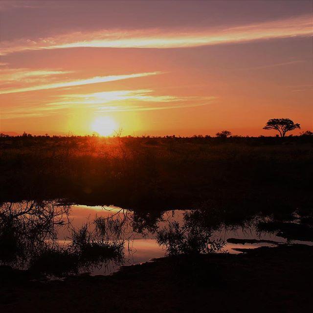 Die Schönheit der Natur 😍 #erlebees #südafrika #reisen #anothersunset