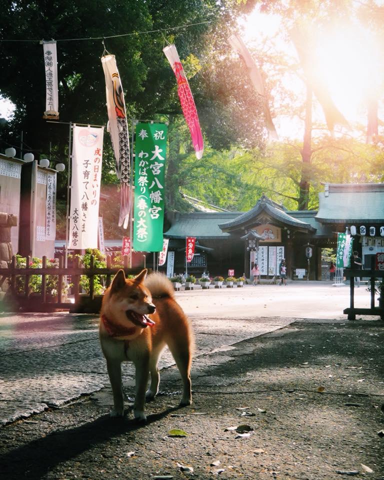 Am 5.5. ist in Japan der Tag des Kindes. Überall im Land hängen traditionell…