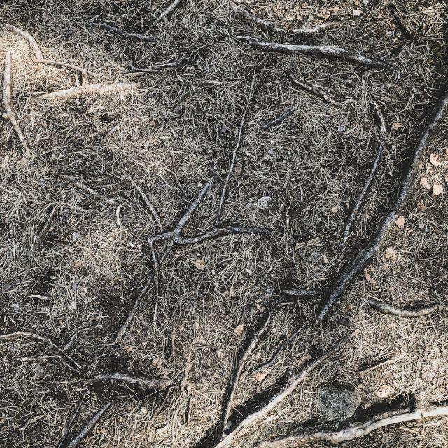 Waldboden, Wurzeln und Nadeln
