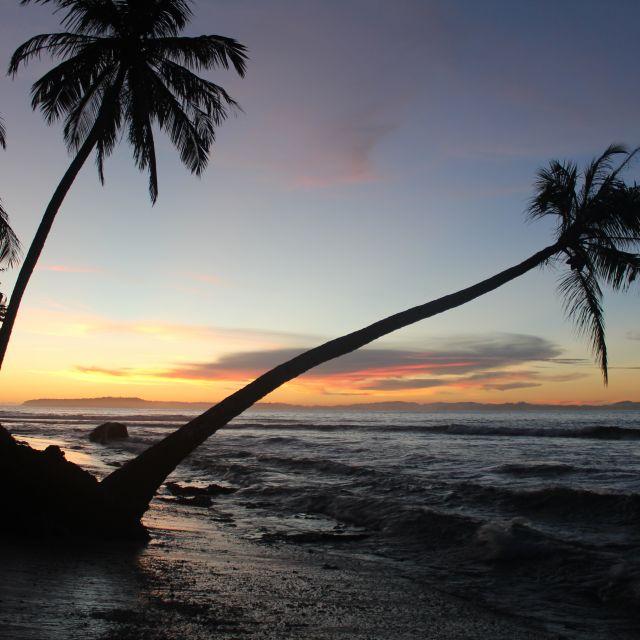 Das Bild zeigt Palmen am Strand im Sonnenuntergang