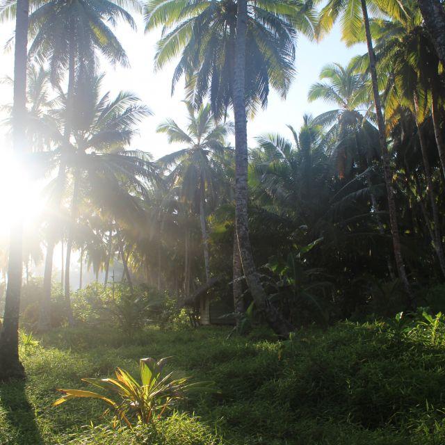 Das Bild zeigt einen sonnendurchfluteten Wald
