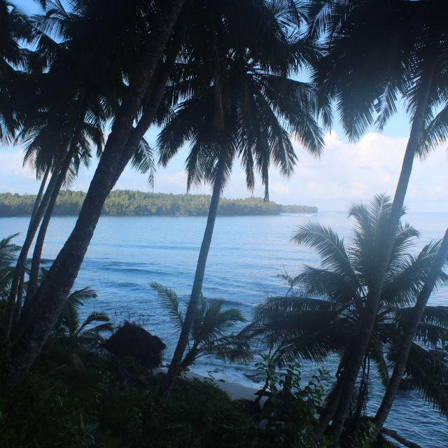 Das Bild zeigt einen bewaldeten Hügel und im Hintergrund das Meer