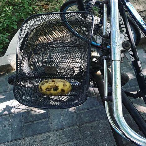 Wer hat da eine Kartoffel in meinem Fahrradkorb liegen gelassen? Ich habe sie…