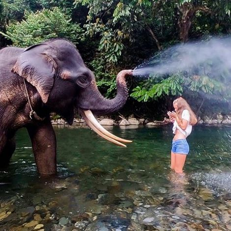 Elefantenwaschtag. 💦🐘 #ErlebeEs #Indonesien #Sumatra #Tangkahan…