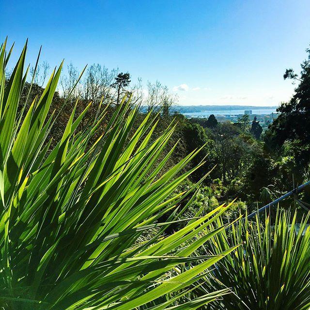 Auch jetzt, wo ich schon ganze zwei Wochen in Auckland bin (das ging so…