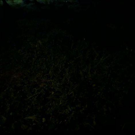 Habe gerade zum ersten Mal Glühwürmchen gesehen und weiß nicht wie ich meine…
