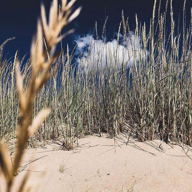 Sechs Kilometer Sandstrand sind selten in den nordischen Ländern. Die Dünen…