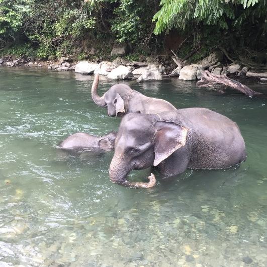 Zuerst waschen die Elefanten sich aber selber