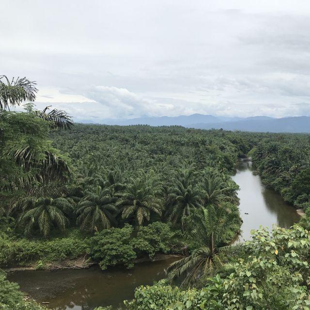Palmenplantagen auf Sumatra