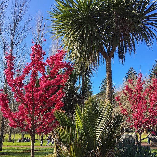 Endlich Frühling 🌸 irgendwie ist das schon komisch sich zwei Mal in einem…