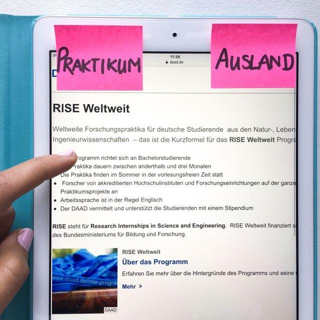 Rise weltweit online