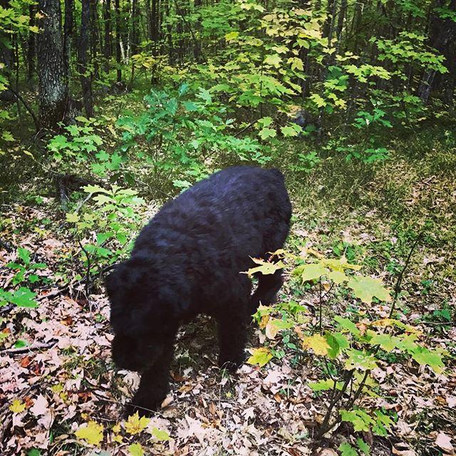 """""""Was, du hast wirklich noch nie einen Bären gesehen?"""" /just Canadian…"""