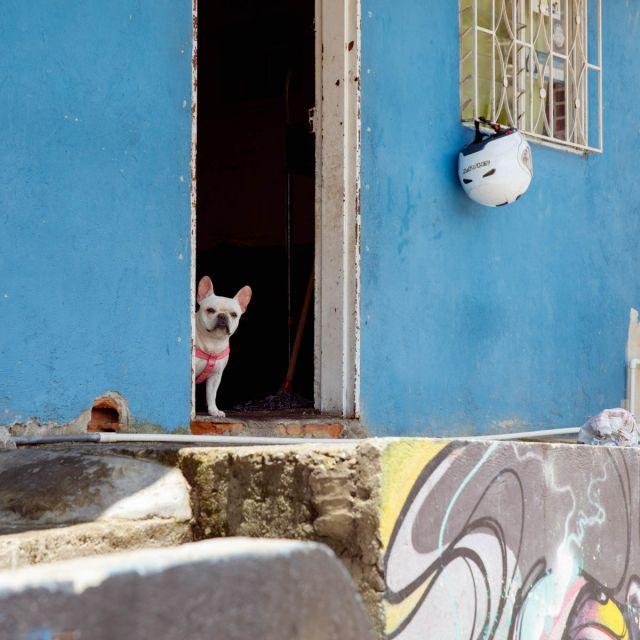 Ein Hund steht in einem Türrahmen in Medellín.