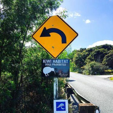 """Wusstest du, dass der Begriff """"Kiwi"""" in Neuseeland sowohl für die Frucht,…"""