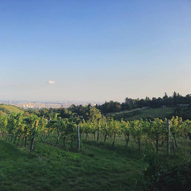 Der Weg von unserer Uni runter, führt uns durch zahlreiche Weingüter (in…