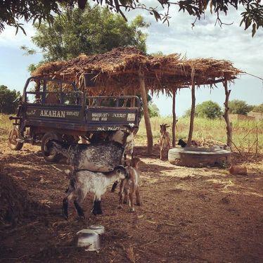 Ziegen und ein alt aussehndes Gefährt in einem Dorf in Burkina Faso.