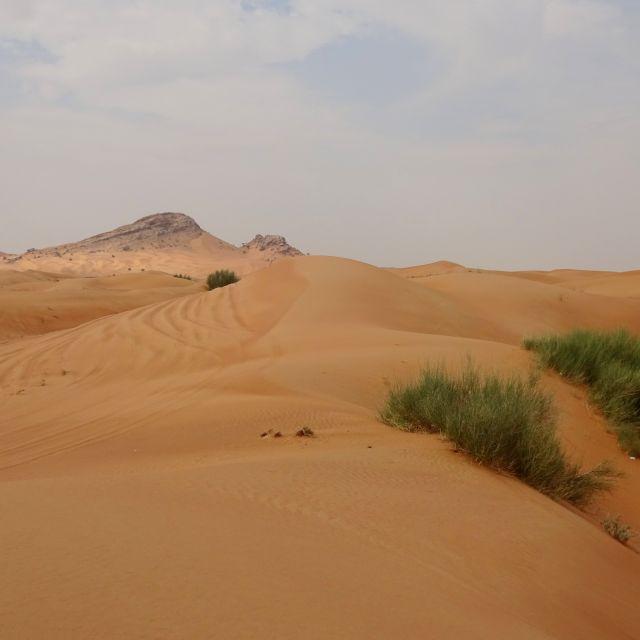 Wüste am Straßenrand
