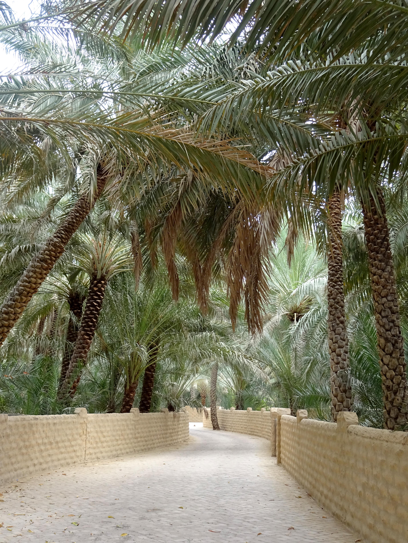 Al Ain – Oasenstadt mitten in der Wüste