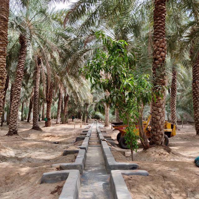 Bewässerungssystem in der Al Ain Oase, umsäumt von Palmen.