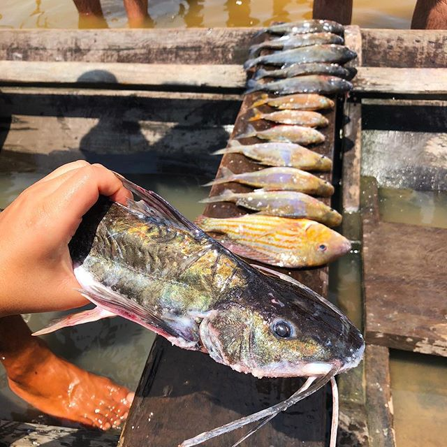 Im Hintergrund liegt eine Reihe toter Fische auf einem Holzbrett in einem Boot, im Vordergrund hält eine Hand einen großen Fisch.